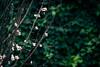Flores (Laura Pereyra (Naini)) Tags: flor flores floración itálica santiponce