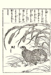 Foxtail millet and Japanese quail (Japanese Flower and Bird Art) Tags: flower foxtail millet setaria italica poaceae bird quail coturnix japonica phasianidae shusui shimokobe kano woodblock picture book japan japanese art readercollection