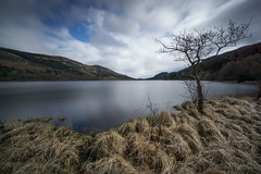 Reaching Out. (RusseII Lees) Tags: tree loch scotland grass shore mountain trossachs