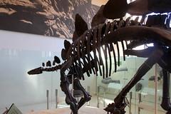 NYC - AMNH: Hall of Ornithischian Dinosaurs - Stegosaurus (wallyg) Tags: americanmuseumofnaturalhistory amnh davidhkochdinosaurwing hallofornithischiandinosaurs manhattan museum newyork newyorkcity ny nyc stegosaurus upperwestside uws