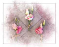 For Lisi (imagek) Tags: lisianthus flower pink texture soft stilllife