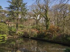 Clyne Gardens 2017 04 07 #3 (Gareth Lovering Photography 3,000,594 views.) Tags: clyne gardens swansea park olympus omdem10ii 14150mm garethloveringphotography
