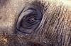 ZOO0028-2 (Akira Uchiyama) Tags: 動物たちのいろいろ 目 目ゾウアジアゾウ