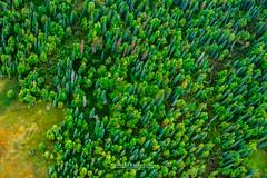 Alaska Drawings (Chiara Salvadori Ph) Tags: aerialphotography aerialview doveviaggi travelphotography unitedstates aerial alaska colors dove fly forest green landscape magazine nature outdoors premiun reportage river scenery talkeetna texture travel usa