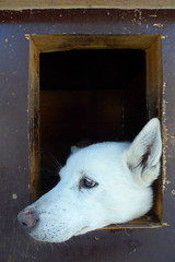 Mushing (s2martin) Tags: 365the2017edition 3652017 day53365 22feb17 husky mushing dog sledding beito tours kennel