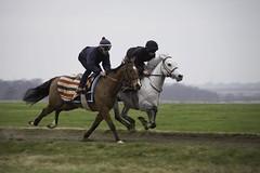 Noah leading on Rosie (She's a Lady); Geoffrey upsides. Cambridge Road this morning. (Daniela Bowker) Tags: horse pony gallop work newmarket heath newmarketheath cambridgeroad