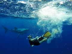 Swimming with some whalesharks