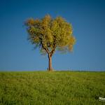 Lonely little oak thumbnail