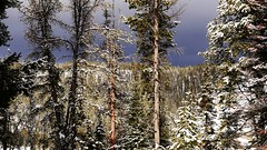 Snow Covered Trees (Susan Roehl) Tags: yellowstoneinwinter2017 yellowstonenationalpark wyoming usa landscape trees mountains snowy darkclouds sueroehl photographictours naturalexposures lumixdmcgx8 35x100mmlens handheld takenfromroad