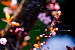 toile d'artiste (kiareimages1) Tags: nature natura images immagini imagery imagenes colors colori couleurs spring printemps primavera