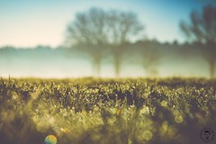 87 - fields of green (Christian_Kohrs) Tags: nature morning dew morgentau morgens natur wiese gras bäume
