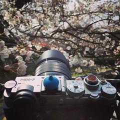 🌸🌸🌸 (里卡豆) Tags: instagramapp square squareformat iphoneography uploaded:by=instagram mayfair