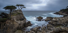 Pebble Beach Coastline (Paul E.M.) Tags: pebblebeach lonecypress cypress monterey california vacation seascape