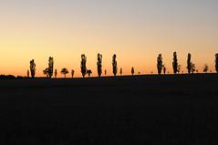 Deutschland Sächsische Schweiz DSC_0472 (reinhard_srb) Tags: deutschland sächsische schweiz lilienstein ebenheit sonnenuntergang windsschutzstreifen bäume kontur schattenriss horizont orange blau dämmerung abend licht goldene stunde