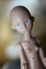 IMG_5326 (Cleo6666) Tags: lana lillycat cerisedolls marron glacé bjd doll chibbi chibbilana
