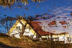 P1060502 upside down Reflection im Winter (Traud) Tags: germany deutschland bavaria bayern spiegelbild reflection upsidedown gartenteich feuchtbiotop pool teich ice eis winter tauwetter