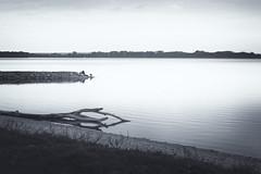 pier (MattusB) Tags: pier molo jutty rest man dog nik collenction kralova vodna nadrz galanta slovakia slovensko 2017 sony a6000 sel50f18 prime lens bw black white colour brue selenium tone