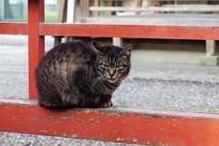Today's Cat@2017-04-10 (masatsu) Tags: cat thebiggestgroupwithonlycats catspotting pentax mx1
