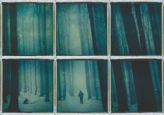 The night is darkening... (iam.ina) Tags: inaechternach impossibleproject instantfilm instantlab polaroid polaroidweek polaroidpals polapals nationalpark bayerischerwald tree trees treeporn snow