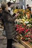 2017-03-11_0691n_waldor (lblanchard) Tags: 2017flowershow displaygarden waldor