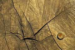 Oregon Garden Bridge 2299 C (jim.choate59) Tags: oregongarden silverton bridge wood wornwood abstract cracks woodworking pattern nail jchoate texture saw
