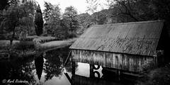 20141005_123951_NIKON D300_DSC_9309.jpg (markrflickr) Tags: blackandwhite reflection tree water scotland trossachs lochard