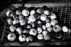 Apples (FTonyC) Tags: blackandwhite rot monochrome fruit decay apples mould graden sigmadp2