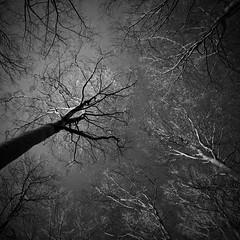 *** (Spartaxus) Tags: trees bw fuji