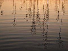 Memories of Warm Summer Evenings, 2 (Axiraa - back very soon) Tags: sunset summer sun lake water swim lago see evening meer estonia estland viro estonie λίμνη эстония saadjärv tartumaa oзеро vanagram εσθονία