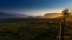 Sun Fog (Thorsten G Lichtwelle Fotografie) Tags: nature field fog forest sunrise nebel herbst bluehour wald sonnenaufgang lightandshadow gegenlicht morgens latesummer melle