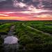 Schwadorf Sunset-65-1