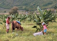 Los guajiros (GMH) Tags: viaje verde familia rural cuba campo campesinos latinoamrica ltytr1