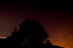 Trees in the night sky (GR1CreativeMedia) Tags: sky silhouette night stars nikon tokina 1224 d600