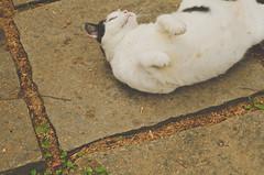 Printemps (Pri Morales) Tags: world travel brazil paraty project wonderful 50mm nikon rj pastel alma details adorable osampo lovely job printemps pri detalhes jadore streetphotograpy paratyemfoco