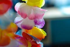 Aloha (Iraaaaaa) Tags: flowers flores colors 35mm nikon colorful f14 hawaiian aloha hawai ohana hawaianas samyang d7100
