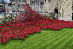 London, Tower Poppies