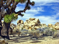 Old Joshua & Rocks, Joshua Tree NP 4-13 (inkknife_2000 (7 million views +)) Tags: usa landscape desert joshuatree skyandclouds joshuatreenationalpark yuccaplant rockpiles dgrahamphoto