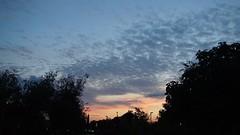 Puesta de sol (mati-hari) Tags: plantas arboles nubes cielos farolas ocaso ramas parques rivasvaciamadrid
