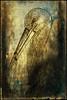L'antica pergamena e la cicogna (Borgo Armonico) Tags: antico disegno texure uccello profilo cicogna pergamena anticato
