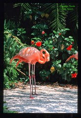 Flamingo (andy2k27) Tags: