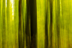 abstract trees (photo_scott) Tags: park camera autumn abstract green fall nature colors forest canon scott movement woods long exposure slow state pennsylvania pa shutter abstraction kennedy ohiopyle 60d wwwskennedyphotoscom