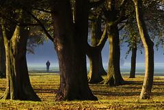 Park Walk... (Digital Diary........) Tags: uk autumn trees mist mood atmosphere walker sthelens merseyside sherdley mistytrees sherdleypark