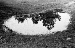 Reflecting pool (snail,snail) Tags: trees blackandwhite reflection film college nature grass contrast 35mm puddle 35mmfilm swamp classproject blackandwhitefilm filmstudent photographystudent teenphotographer filmproject