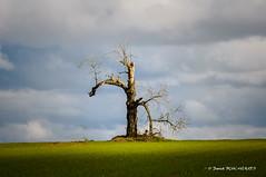 Epouvantail / Scarecrow (patoche21) Tags: france tree nature landscape nikon 21 burgundy deadtree paysage bourgogne 70200mm d300 arbremort côtedor bèze ruralité rurality paysagenaturel capturenx2 patrickbouchenard