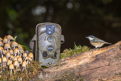 My Trail Cam (nick.bond@rocketmail.com) Tags: little cam lancashire trail acorn 6210 trailcam nickbond greatharwood canon7020028 canon6d acorn6210trailcam