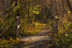 The path through the woods (Kenneth Solfjeld) Tags: autumn norway norge woods path northern nordnorge nordland northernnorway nesna