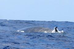 DSC_1085 bryde walvis