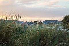 Rosslare Beach Dune (Thomas Mildenberger) Tags: ireland sunset nature seaside sony dune alpha a58