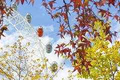 Colores de otoo en Londres (Ivaohara) Tags: london colours autum londoneye