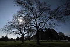 Berna (kri.photo) Tags: swiss università bern svizzera albero berna